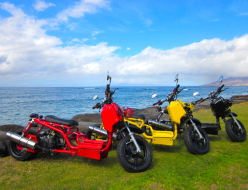 Pit Bull Moped – Exclusively at Maui Scooter Shack!